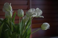 Indoor_Flowers